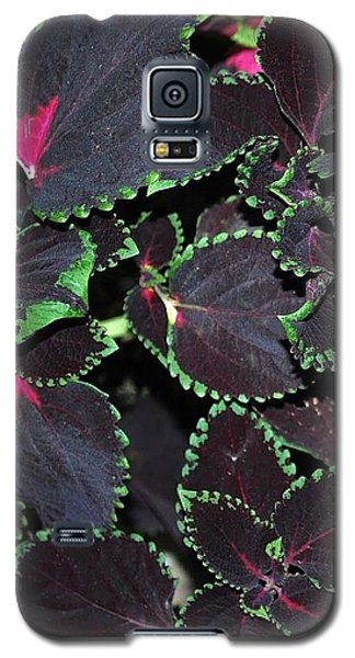 Galaxy S5 Case featuring the photograph Trimmed In Green by Mary Beth Landis