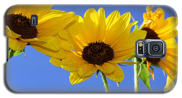 Trio In The Sun - Yellow Daisies By Diana Sainz Galaxy S5 Case