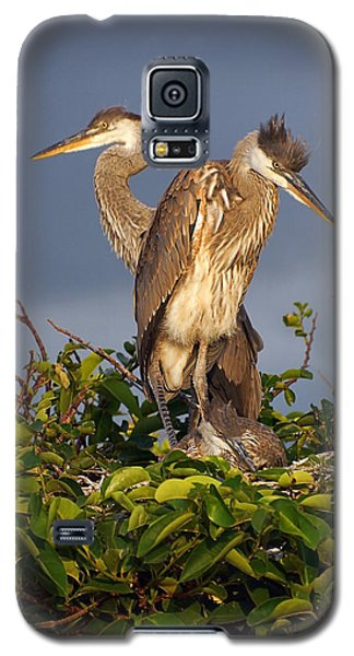 Trio Of Blue Heron Chicks Galaxy S5 Case