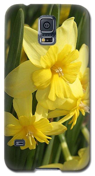 Tripartite Daffodil Galaxy S5 Case by Judy Whitton