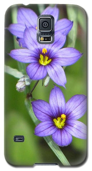 Triple Purple Galaxy S5 Case