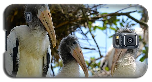 Triplet Wood Stork Nestlings Galaxy S5 Case by Richard Bryce and Family