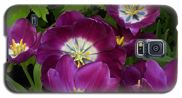 Triumph Tulips Negrita Variety Galaxy S5 Case by Byron Varvarigos
