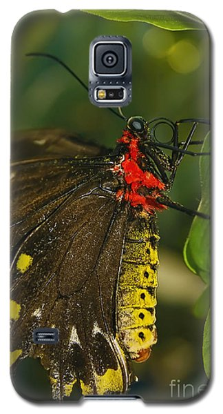 Galaxy S5 Case featuring the photograph Troides Helena Butterfly  by Olga Hamilton