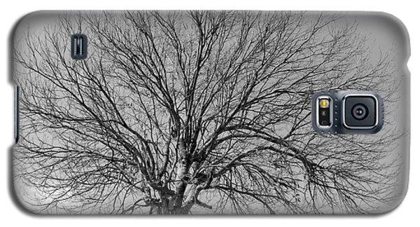 Tropic Winter Galaxy S5 Case by Amar Sheow