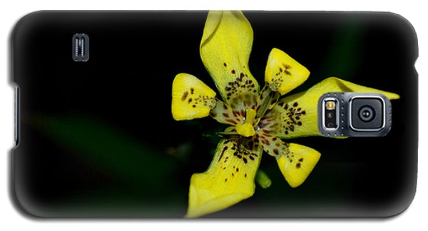 Tropic Yellow Galaxy S5 Case by Miguel Winterpacht
