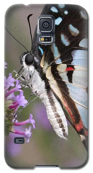 Galaxy S5 Case featuring the photograph Tropical Butterfly by Chris Scroggins