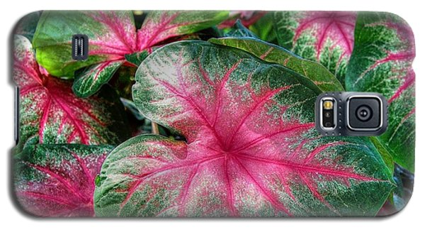 Galaxy S5 Case featuring the photograph Tropical Delight by Kathy Baccari