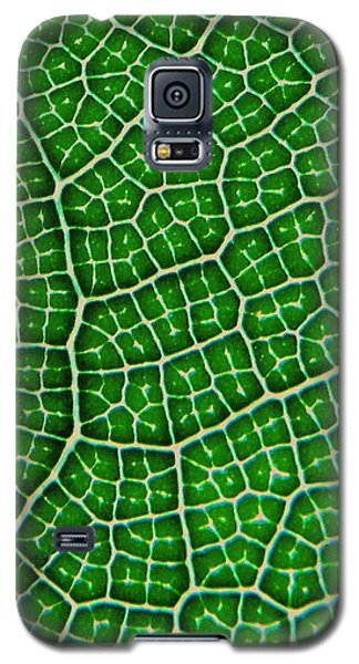 Tropical Fig Leaf Veins Galaxy S5 Case