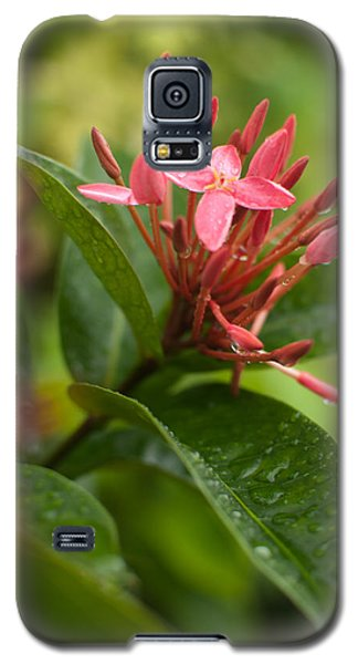 Tropical Flowers In Singapore Galaxy S5 Case