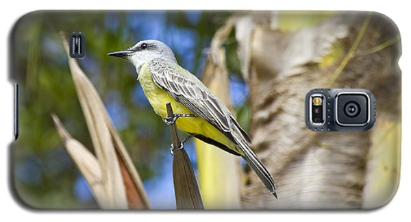 Galaxy S5 Case featuring the photograph Tropical Kingbird by Teresa Zieba