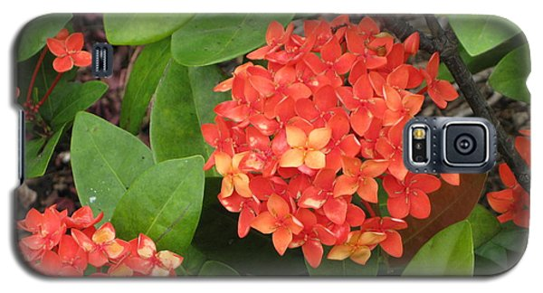Galaxy S5 Case featuring the photograph Tropical Orange Flower by Judy Palkimas