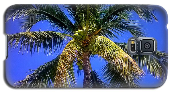 Tropical Palm Trees 8 Galaxy S5 Case