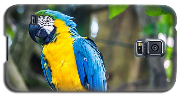 Tropical Parrot Galaxy S5 Case by Sara Frank
