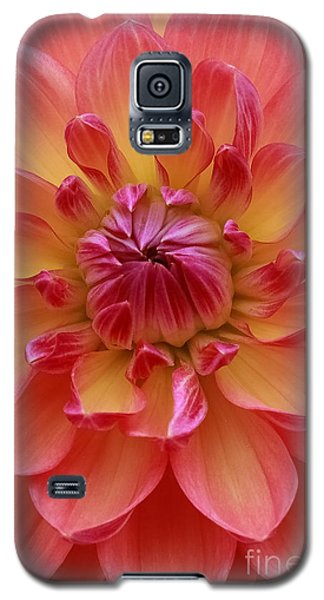 True Beauty Galaxy S5 Case by Geri Glavis