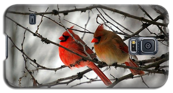 Galaxy S5 Case featuring the photograph True Love Cardinal by Peggy Franz