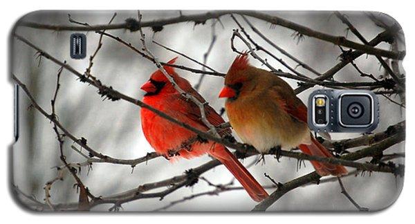 True Love Cardinal Galaxy S5 Case