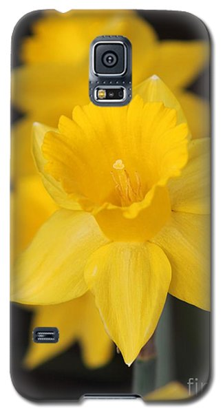 Trumpet Daffodil Named Exception Galaxy S5 Case