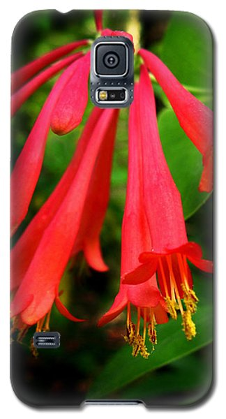 Galaxy S5 Case featuring the photograph Wild Trumpet Honeysuckle by William Tanneberger