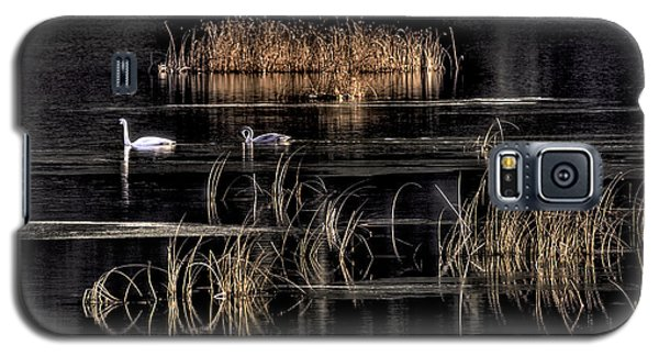 Trumpeter Swans A Swimming Galaxy S5 Case