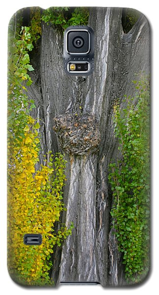 Trunk Lines Galaxy S5 Case