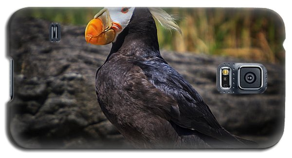 Tufted Puffin Galaxy S5 Case