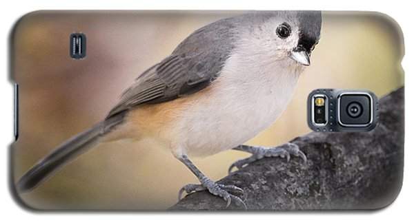 Tufted Titmouse Galaxy S5 Case by Bill Wakeley