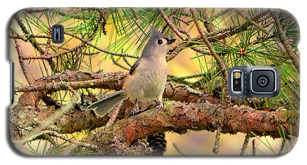 Tufted Titmouse Galaxy S5 Case by Deena Stoddard