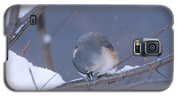 Tufted Titmouse Eating Seeds Galaxy S5 Case by Paul J. Fusco