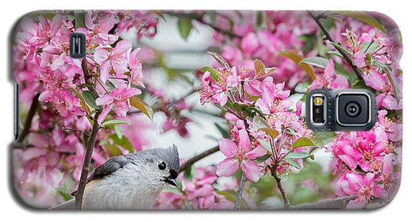 Tufted Titmouse In A Pear Tree Square Galaxy S5 Case by Bill Wakeley
