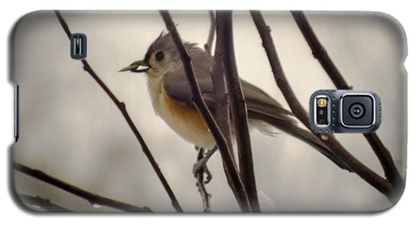Tufted Titmouse Galaxy S5 Case by Karen Wiles