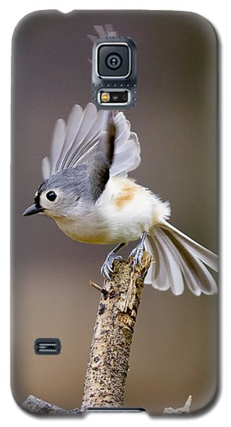Tufted Titmouse Takeoff Galaxy S5 Case