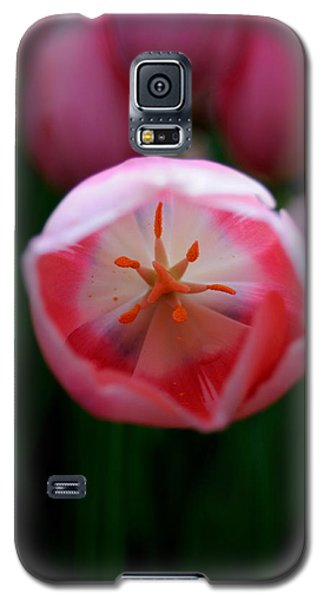 Galaxy S5 Case featuring the photograph Tulip Beauty  by Haleh Mahbod
