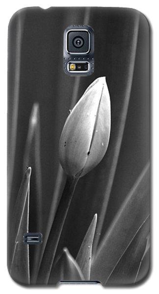Tulip Blossom Bw Galaxy S5 Case
