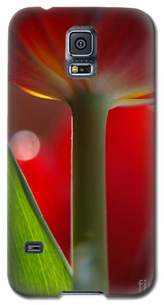 Tulip Bokeh Galaxy S5 Case by Trena Mara