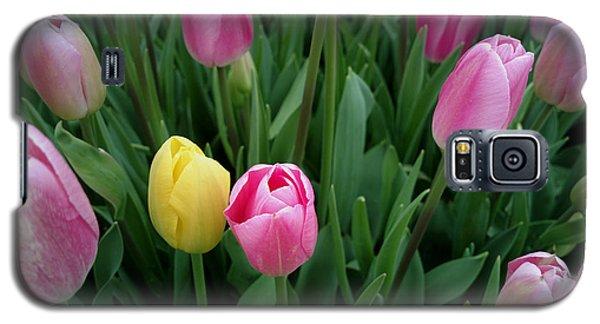 Tulip Festival - 36  Galaxy S5 Case by Hanza Turgul