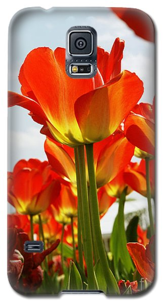Galaxy S5 Case featuring the photograph Tulip Field 1 by Rudi Prott
