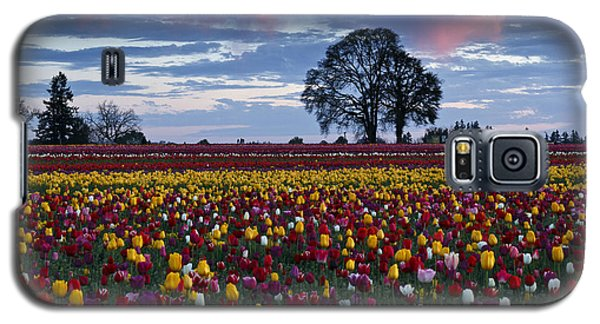 Tulip Field's Last Colors Galaxy S5 Case by Wes and Dotty Weber