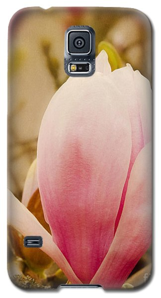 Tulip From A Tulip Tree Galaxy S5 Case by MaryJane Armstrong
