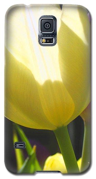 Tulip In Bright Sunlight Galaxy S5 Case