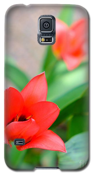 Tulip Of Dream Galaxy S5 Case