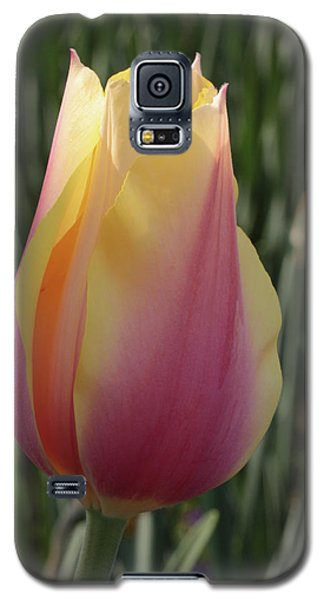 Galaxy S5 Case featuring the photograph Tulip Portrait by Harold Rau