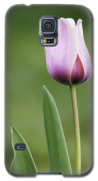 Galaxy S5 Case featuring the photograph Tulip 2 by Ram Vasudev