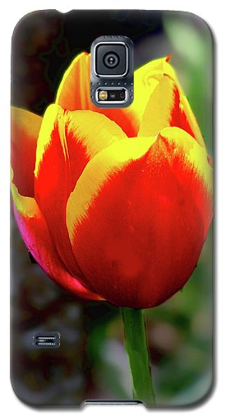 Galaxy S5 Case featuring the photograph Tulip by Ron Roberts