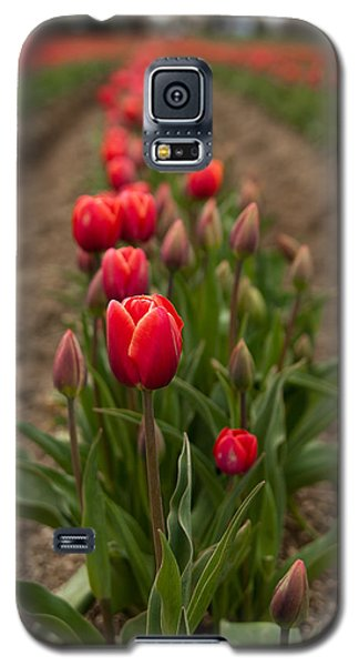 Galaxy S5 Case featuring the photograph Tulip Row by Erin Kohlenberg