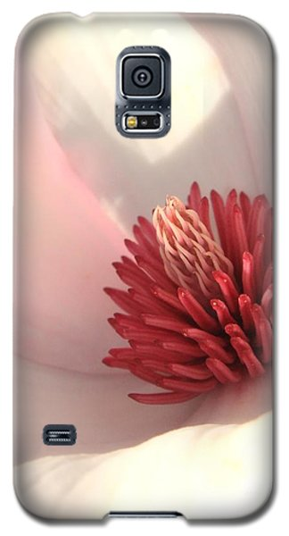 Saucer Magnolia Galaxy S5 Case - Tulip Tree Blossom by Carol Groenen