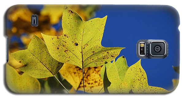 Galaxy S5 Case featuring the photograph Tulip Tree In Autumn by Phil Abrams