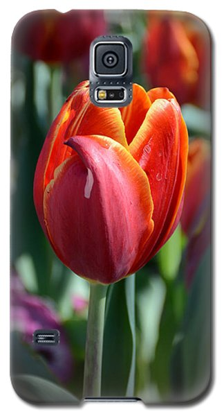 Tulip With A Twist Galaxy S5 Case