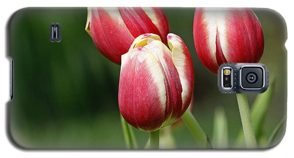 Galaxy S5 Case featuring the photograph Tulips 1 by Denise Pohl