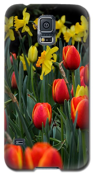 Tulips And Daffodils Galaxy S5 Case